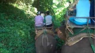 Chiang Mai Tour - Elephant Riding And Jungle Trekking