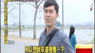 最美15條花海街道台南木棉花道亞洲唯一