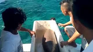 DUYUNG (Dugong dugon) DI MANTEHAGE KEMBALI KE HABITATNYA