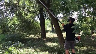 3. STIHL HT 103 - professional pole pruner with telescopic shaft