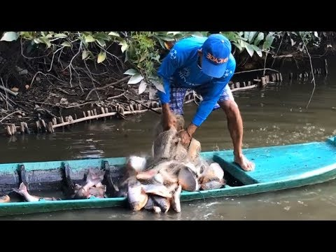 Video Top 3 Unbelievable Cast Net Fishing GIANT Red Belly Piranhas download in MP3, 3GP, MP4, WEBM, AVI, FLV January 2017