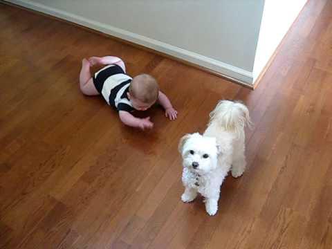 愛笑小寶寶看到小白狗不但站立還會跳舞!!超可愛畫面讓人瞬間暖心