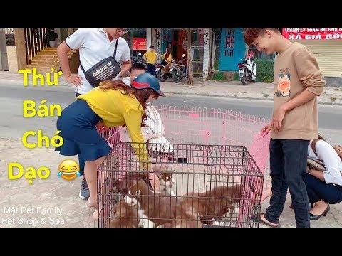 Thánh Cò bán chó dạo mới xuất hiện - cười náo loạn cả khu phố vì quá duyên - Mật Pet Family - Thời lượng: 13 phút.
