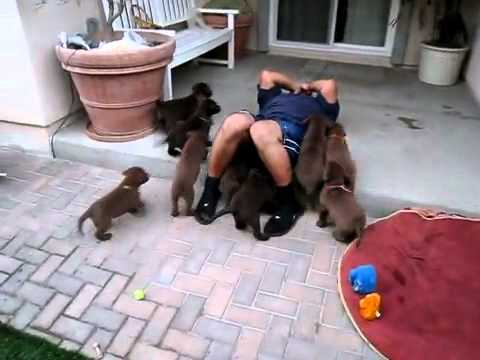 Puppies Go Into Attack Mode