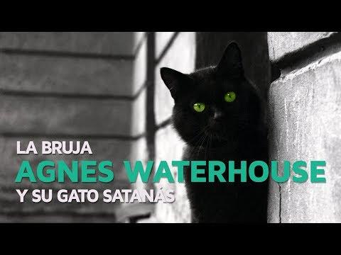 La bruja Agnes Waterhouse y su gato Satanás 🐱 видео