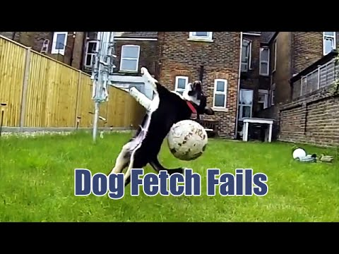 Cute Comedy: Dog Fetch FAILS!