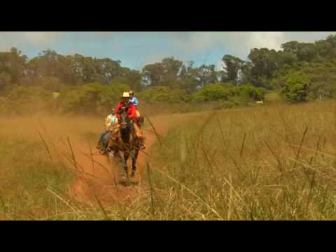 Upcountry Maui Horse Culture
