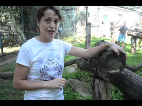 Bemutatták a leopárd bébiket II.  – szon.hu