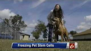 Stem Cell Therapy For Pets | Aired 2/20/12 On Local 6 Orlando | Val-U-Vet