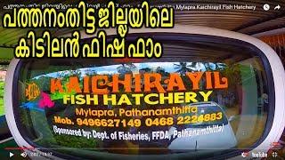Video പത്തനംതിട്ട ജില്ലയിലെ കിടിലൻ ഫിഷ് ഫാം - Pathanamthitta Mylapra Kaichirayil Fish  Hatchery MP3, 3GP, MP4, WEBM, AVI, FLV September 2018