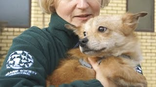 Dogs from Korean meat farm find loving homes by The Humane Society of the United States