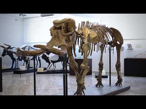 video Università degli Studi di PALERMO