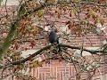 kraai vliegt op uit boom