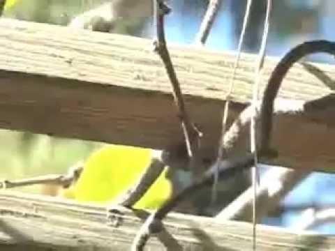 Un joven rescata a un bebé de colibrí y se hacen mejores amigos