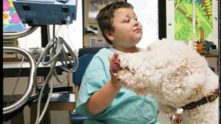 Tell Me A Story: Therapy Dogs Bring Smiles To Kids At Cincinnati Children's