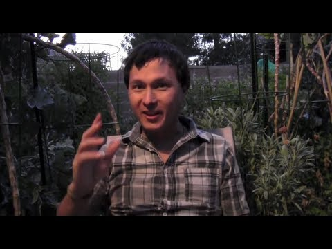 How to Best Deal with Bugs in Your Organic Garden and more Gardening Q&A