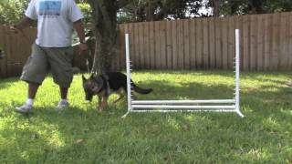 Dog Training&Care : Tips On Training Your Puppy