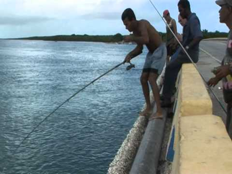 SHORE FISHING - Shore fishing Cayo Coco Cuba.