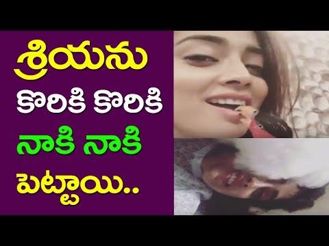 A Bird And A Dog Kissing Licking Shriya Saran | Pet Animals | Pet Birds | Telugu Heroine | Taja30