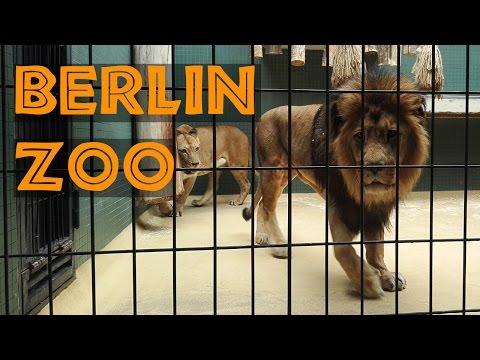 The Berlin Zoo in HD