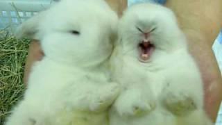 2 Super Cute Bunnies
