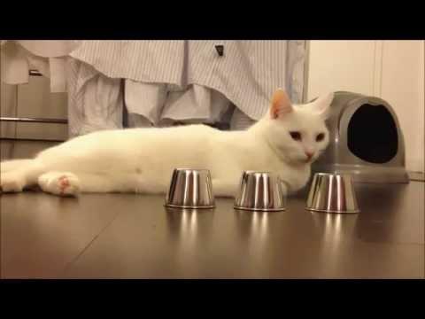 Con mèo bá đạo, mà nghi không phải là mèo luôn :*)