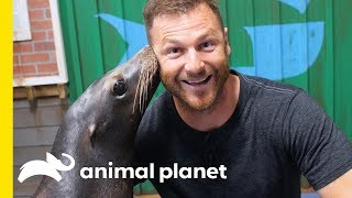Hanging Out With Seals and Sea Lions at Georgia Aquarium | Animal Bites with Dave Salmoni by Animal Planet