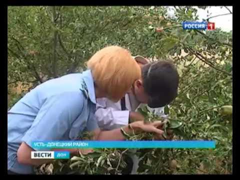 Пухляковский агропромышленный техникум потерял яблоневый сад