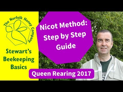 A Beginners Guide To The Nicot Method Of Queen Rearing