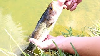 """So we went to the pond today to see if we could hook into some fish and we did!!! It was a good day and I am glad we went to the pond even through it was really hot outside!!!MUSIC- Spike vibes https://www.youtube.com/channel/UCLY3kskbNAeDl3utrSfccJA/videosLURES I USEStorm Live kicking Minnow-https://goo.gl/CbMb6MMatzuo Ikari lipless crankbait- https://goo.gl/RBPTdyStorm 3"""" Wildeye Bluegill-https://goo.gl/APLKxCDUCK LURE-https://goo.gl/jMYCz1SUNFISH LURE-https://goo.gl/GhTpRcDOUBLE PLOPPER- https://goo.gl/lVmOaUROD AND REELSMACH 1 Speed Spool Combo- https://goo.gl/ibmLGlMACH 2 REEL- https://goo.gl/th3A2yGhost Ducket rod- https://goo.gl/G0upkPUgly Stick Combo- https://goo.gl/1kLk7mCamera GearGo Pro Hero 5- https://goo.gl/eUnDgcCannon 70 D with lens- https://goo.gl/hxAeuu*above are amazon associate links*"""