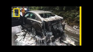 Watch: 'Slime Eels' Explode on Highway After Bizarre Traffic Accident | National Geographic