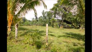 Dipolog Philippines  city photo : Philippine Farm and Beautiful House, Dipolog City