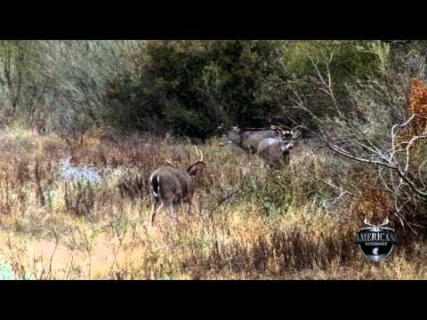 Amanda's Reynolds Whitetail hunt