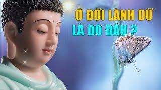Ở Đời Lành Dữ Là Do Đâu ? Lời Phật Dạy Bớt Khổ Tiêu Tan Phiền Muộn