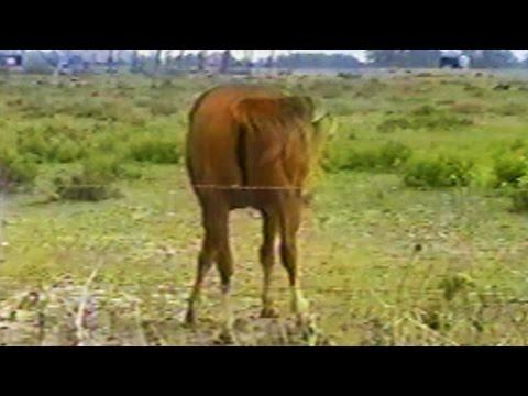 Dark Horse ft. Juicy Farts