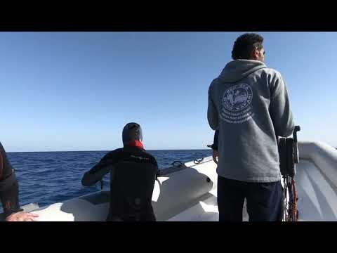 Unexpected dolphin encounter