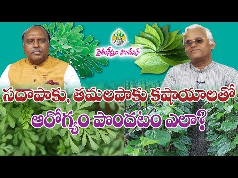 Common Rue, Betel Herbs Medicinal Values - Heath Benefits || KhaderValli || Rythunestham