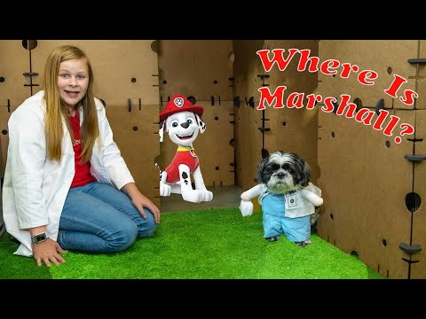 Assistant Hunts for Paw Patrol Marshall and PJ Masks in Box Fort City