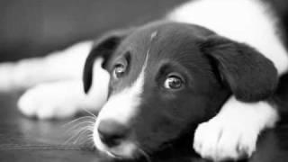 O amor de um cão