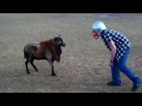 CRAZY MAN BUTS HEADS WITH RAM (MUST WATCH)
