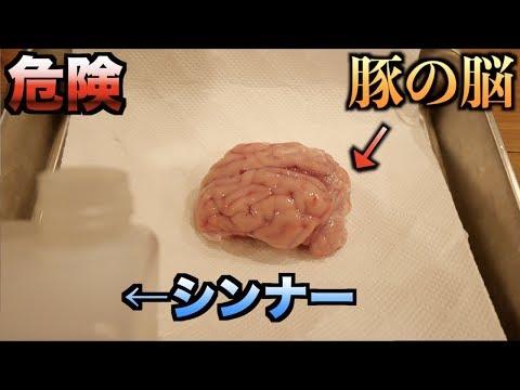 【超危険】シンナーがどれだけ脳に悪影響を及ぼすかわかる動画