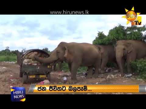 Court seeks 2 reports on tusks of Dala Poottuwa