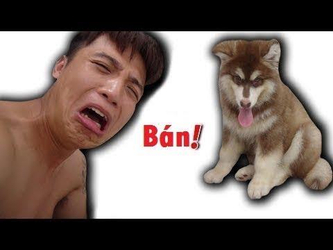 :v  hết tiền nguyễn thành nam bán chó funny  :d  -  haivl | hài hước | hài vl