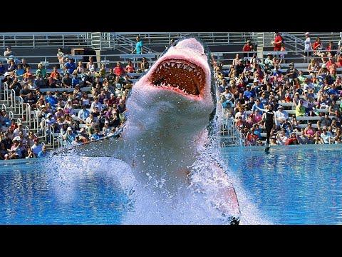 Pourquoi AUCUN Aquarium Dans Le Monde n'a de Grand Requin Blanc!