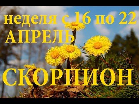 СКОРПИОНЫ. ПРОГНОЗ на НЕДЕЛЮ с 16 по 22 апреля 2018г. - DomaVideo.Ru