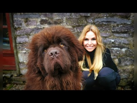 THE NEWFOUNDLAND DOG - WORLD'S MOST POWERFUL WATER DOG