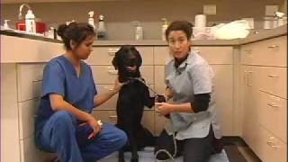 How to Trim Nails on Dog - LazyPaw Animal Hospitals