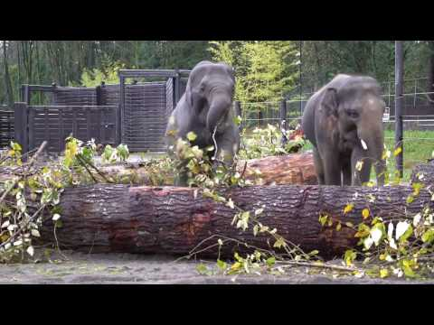 Giant Recycled Logs Make Great Elephant Toys