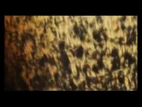 Nibiru - The end of the World 2032