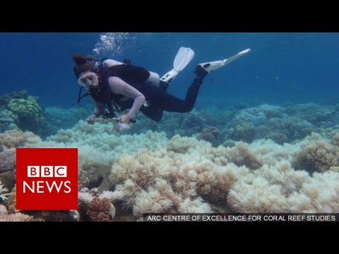 Great Barrier Reef: 2/3 damaged in 'unprecedented' bleaching – BBC News